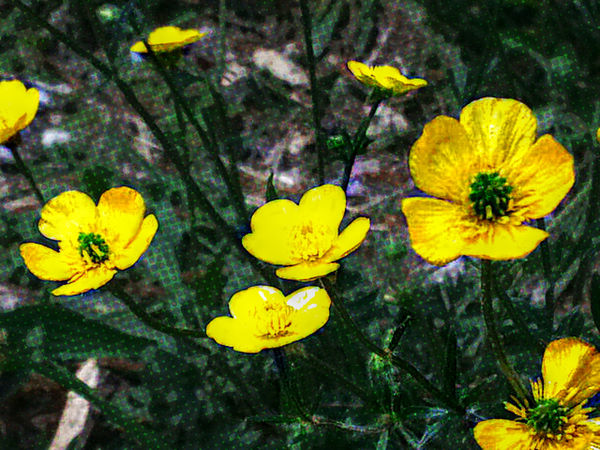 Beauty In Nature Blooming Botany Close-up Day Flower Flower Head Focus On Foreground Fragility Freshness Growth In Bloom JustJennifer@TruthIsBeauty Nature No People Outdoors Petal Plant Pollen Selective Focus Stem Tranquility TruthIsBeauty Photographic Art 🌷 TruthIsBeauty 💯 Yellow