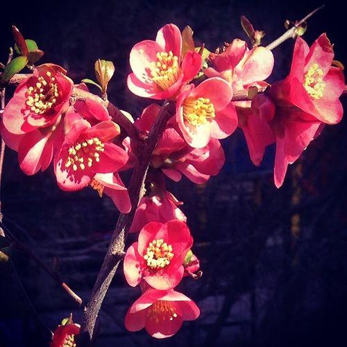 Bahar Bahardalı Bahce