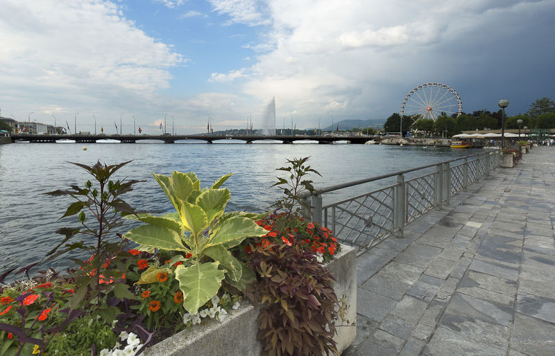 Views of Lake Leman and Promemade du Lac, in the city of Geneva, Switzerland. It is a city and commune of the Swiss Confederation, located near the French border. Sky Water Architecture Built Structure Nature Plant Cloud - Sky River Bridge Day Bridge - Man Made Structure Connection No People Building Exterior Transportation City Outdoors Flower Railing Bay Geneve Lac Léman Lac Of Geneve Switzerland Promemade Du Lac
