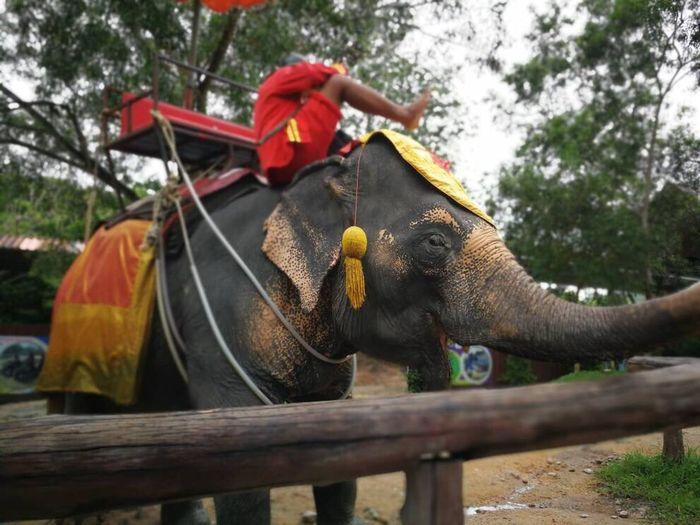 Be. Ready. EyeEmNewHere Eeyem Photography Transportation Outdoors Hatyai Thailand Domestic Animals Elephants Save Animals Save Elephants Be Human Border Songkla