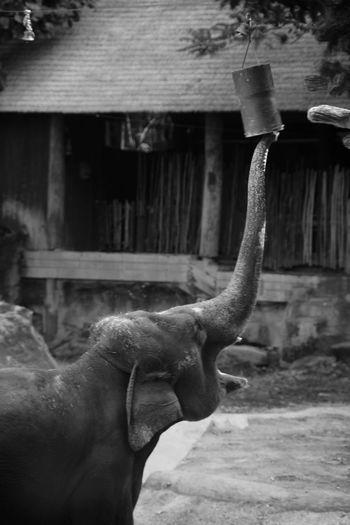 シンガポール動物園にて