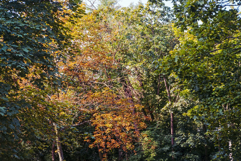 Trees in forest during autumn