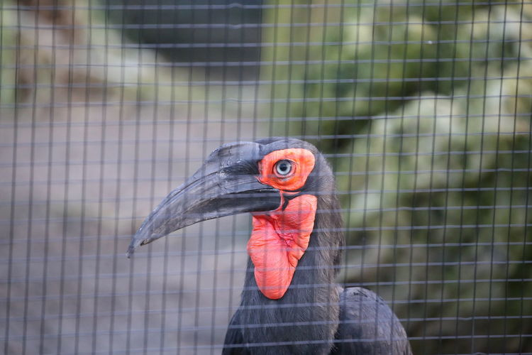 Animal Themes Animals In Captivity Bird Cage Close-up Day No People One Animal Outdoors