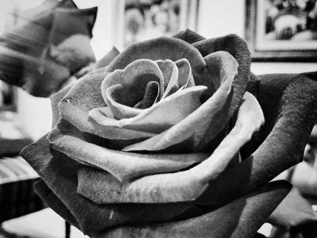 Black And White Blackandwhite Eye4photography  Monochrome