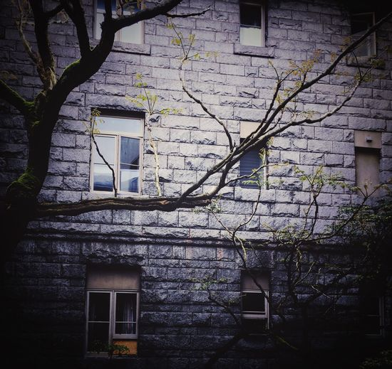 Dark scene of trees with heritage building wall background. Architecture Architecture_collection Building Exterior Dark Scene Dramatic Heritage Heritage Building Old Buildings Stone Material Stone Wall Stone Wall Background