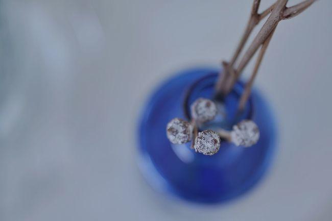 Blue Studio Shot Close-up