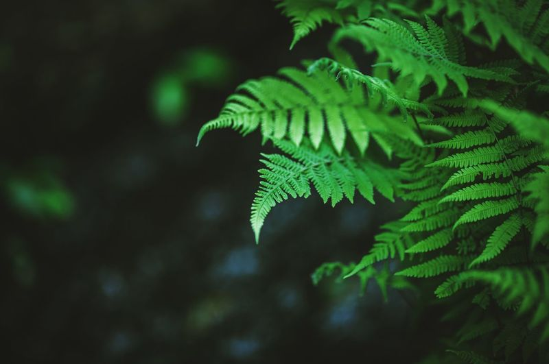 Leaf Green Color Close-up Nature Plant Fern No People Growth Branch Forest Beauty In Nature Tree Outdoors Day Ferns Green Taiwan Yangming Mountain National Park Freshness Relax