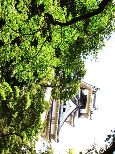 【Kochi,Japan】Kochi castle 高知城 Kochi Castle Japan Kochi Tree Skyscraper Sky Architecture Building Exterior Built Structure Green Color