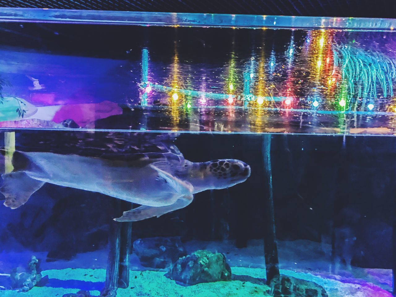 fish, water, underwater, aquarium, sea life, animal themes, swimming, animals in captivity, animals in the wild, animal wildlife, one animal, indoors, no people, nature, jellyfish, undersea, multi colored, close-up, sea, goldfish, beauty in nature, day