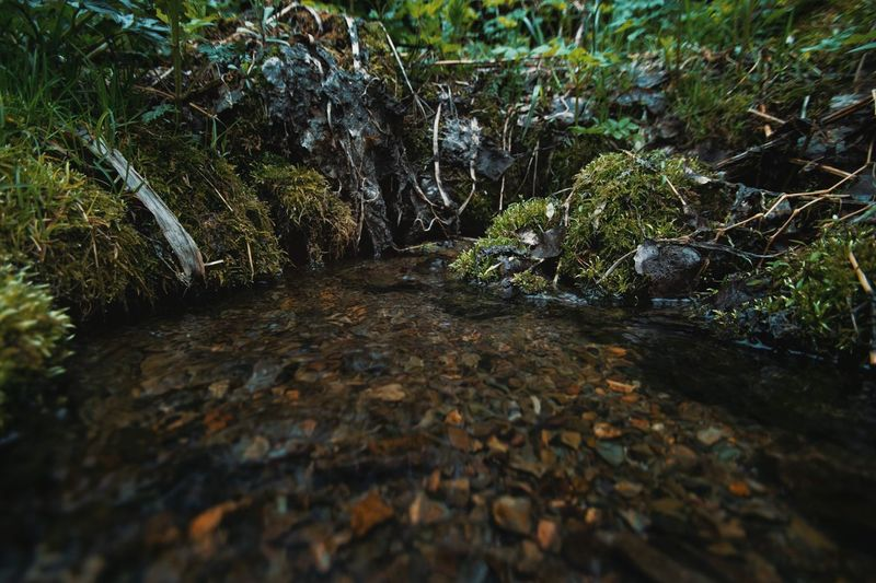 Горный ручей Алтая Plant Growth Nature No People Tree Day Water Beauty In Nature Forest Land Tranquility Green Color Rock Selective Focus Solid Outdoors Moss Scenics - Nature Rock - Object Surface Level