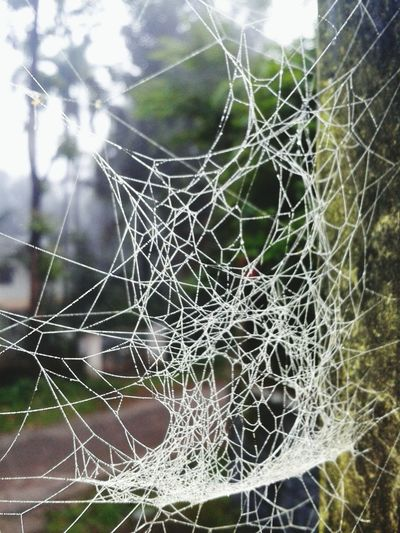 Spider web touched by morning mist