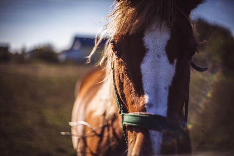 Horse Horseportrait Animals Sun Sunshine Cute Close-up 50mm