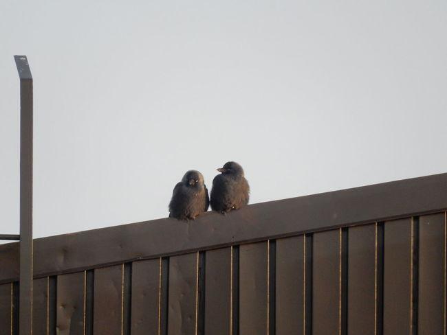 Urban Birds Birds