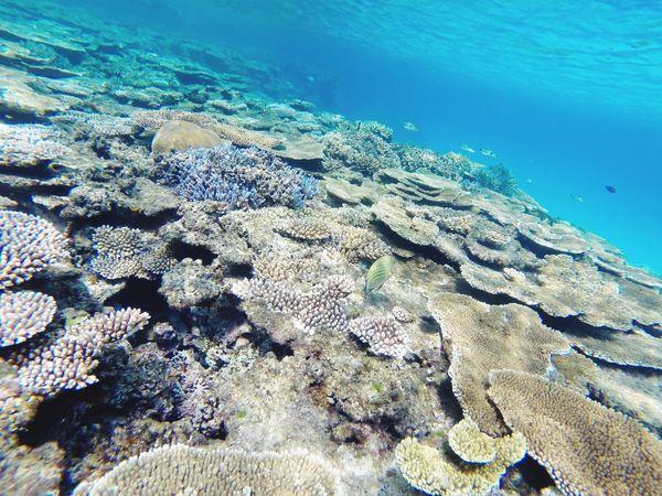 My Best Photo 2015 Hateruma Blue Haterumajima Okinawa Sea
