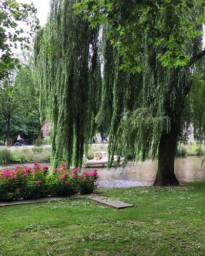 City Canal Tree