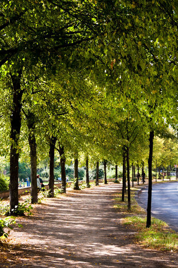 Berlin Berlin Love Berlin Photography Discover Berlin Tree Lined Street Beauty In Nature City Day Discover Berlin Nature No People Outdoors Pathway Road Scenics Shaded Path Shaded Space Street Summer Sunlight Tree Tree Lined Treelined Path Walking Around The City