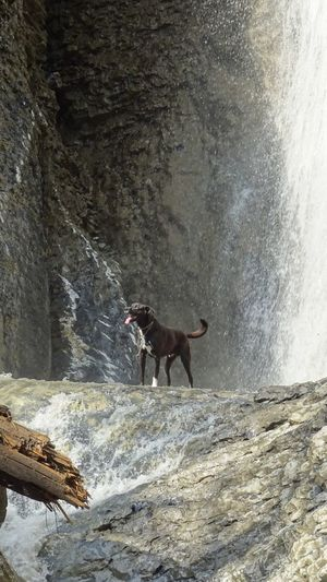 Dog running on rock
