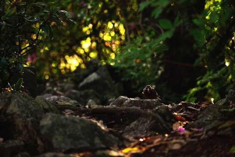 布引 Nature No People Leaf Tree Forest Outdoors Growth Beauty In Nature Day Close-up Low Angle View Sony A7s 神戸 Mountain Bird Bird Photography Japan Beauty In Nature Kobe-shi,Japan Tree Area Woods Street Photography Steps And Staircases Stairs