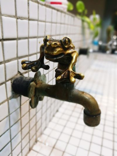 frog Full