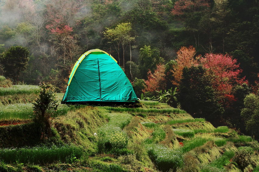 Travlling In Thailand. Camping Day Grass One Person Outdoors Tent Tree Vacations