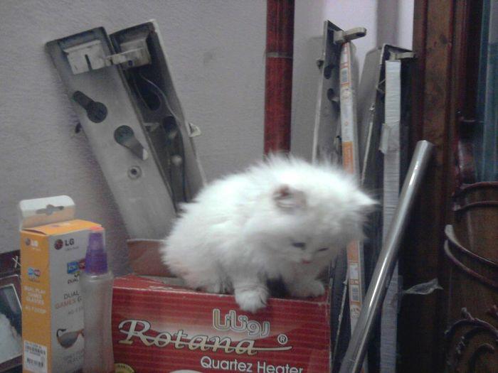 My Cat R.I.P