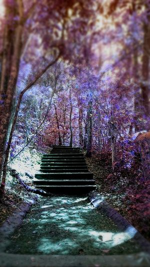 Eyem Nature Lovers  The Pursuit Of Happiness My Edit✨✌ DreamScapes EyeEm Nature Lover Eyeem Best Stairs