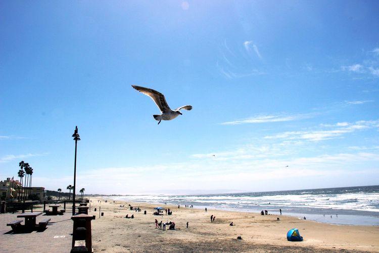 Beach Bird Coastline Horizon Over Water Ocean Sea Seagull Shore Water
