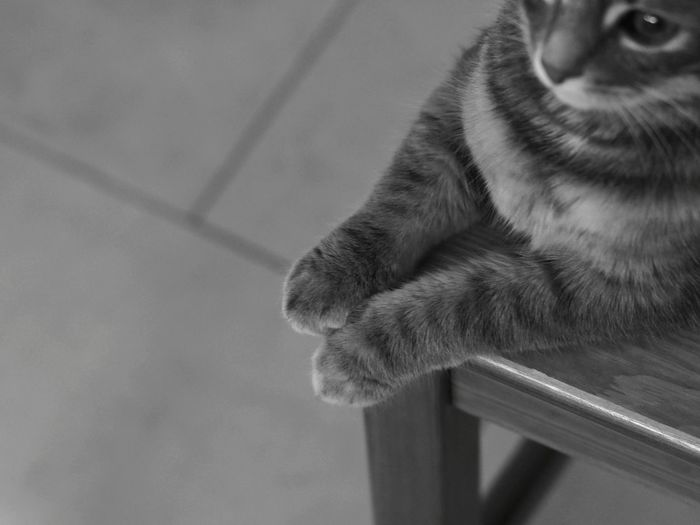 Sitting Furry