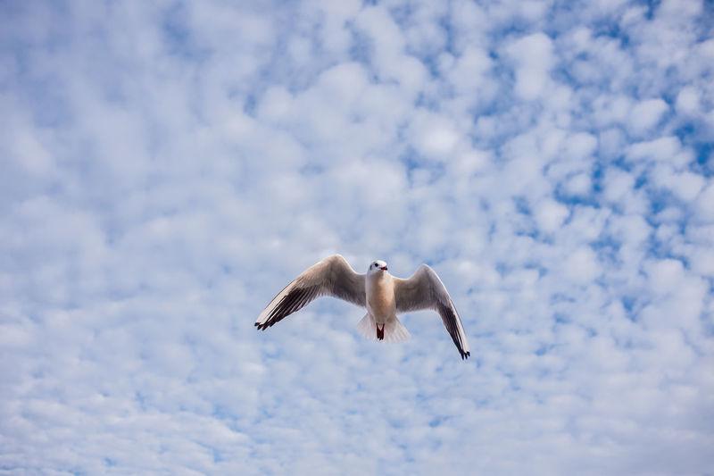 Seagull baltic sea