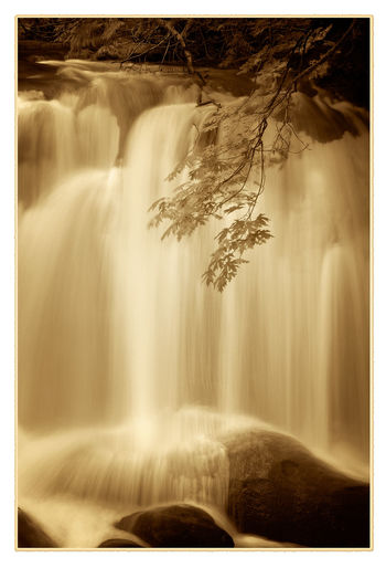 Whatcom Falls Park. A waterfall in the heart of Bellingham, Washington, USA. Autumn Pacific Northwest  Washington Beauty In Nature Bellingham, Washington Black And White Blurred Motion Environment Fall Flowing Water Forest Forest Photography Land Long Exposure Maple Leaf Motion Nature No People Outdoors Scenics - Nature Tree Water Waterfall Whatcom Falls Whatcom Falls Park