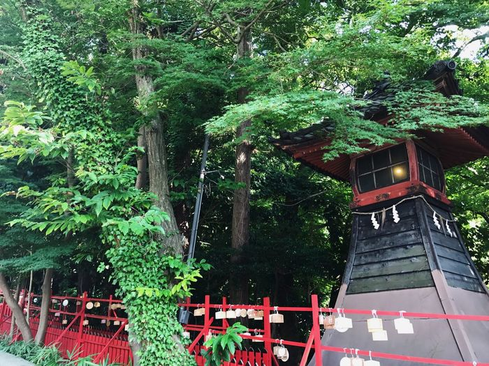 Tree Green Color Built Structure Architecture Outdoors No People Nature Trip Traveling Japanese Style Streetphotography Travel Japan Photography Travel Photography