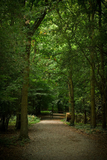 Forest Walk Green Nature Trees Beauty In Nature Day Forest Growth Landscape Nature No People Outdoors Scenics The Way Forward Tranquil Scene Tranquility Tree