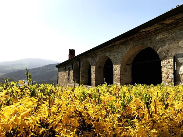 Springtime Nature Mountain Outdoors Arch No People Beauty In Nature Flower Head Architecture Day Barn Old House Yellow Flower Forsythia Hills And Valleys Hedge Paint The Town Yellow