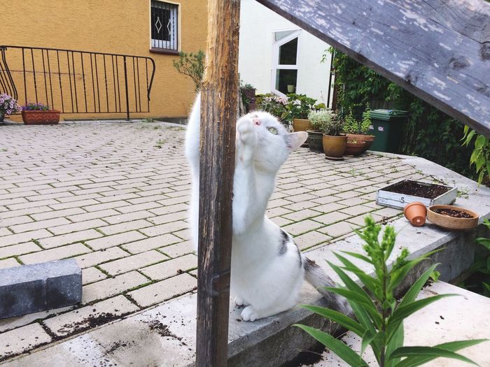 Scratching white cat Animal Themes Building Exterior One Animal Pets Architecture Domestic Cat Built Structure Domestic Animals Outdoors Mammal No People Feline Day Scratching