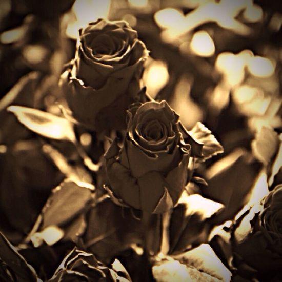 Flowers I my backyard😁🌹