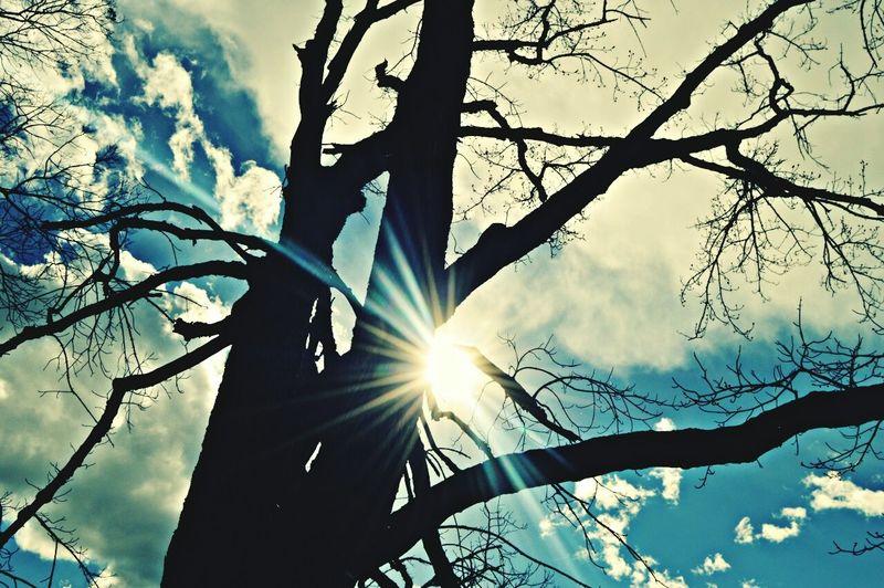 Sun Sky Tree