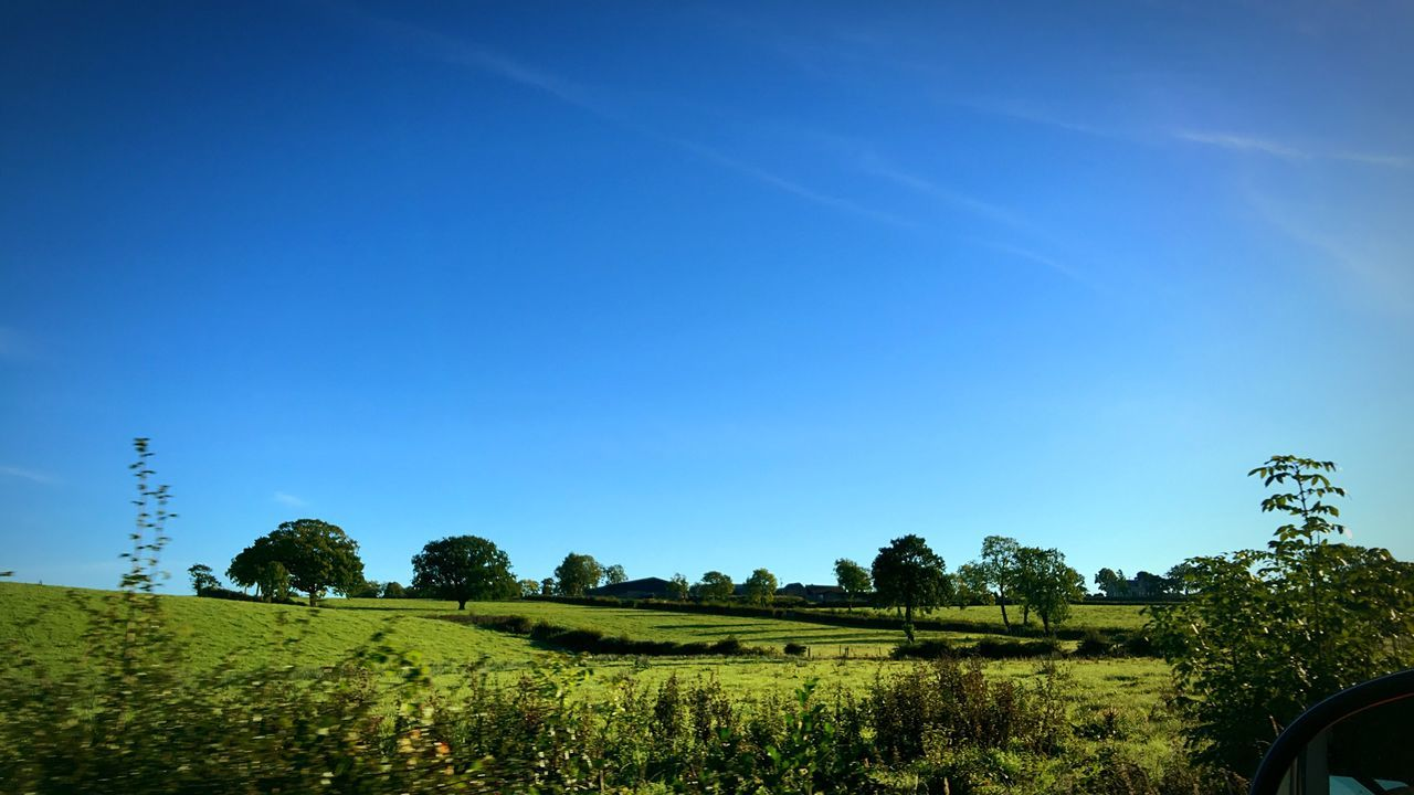 tree, clear sky, blue, field, landscape, growth, agriculture, nature, beauty in nature, day, scenics, no people, tranquil scene, outdoors, sky, tranquility, plant, rural scene
