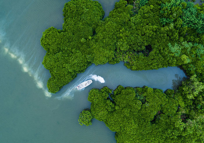 Drone  Mangroves Forest Aerial View Beauty In Nature Close-up Day Drone Photography Dronephotography Droneshot Green Color Growth High Angle View Mangroves Nature No People Outdoors Tree