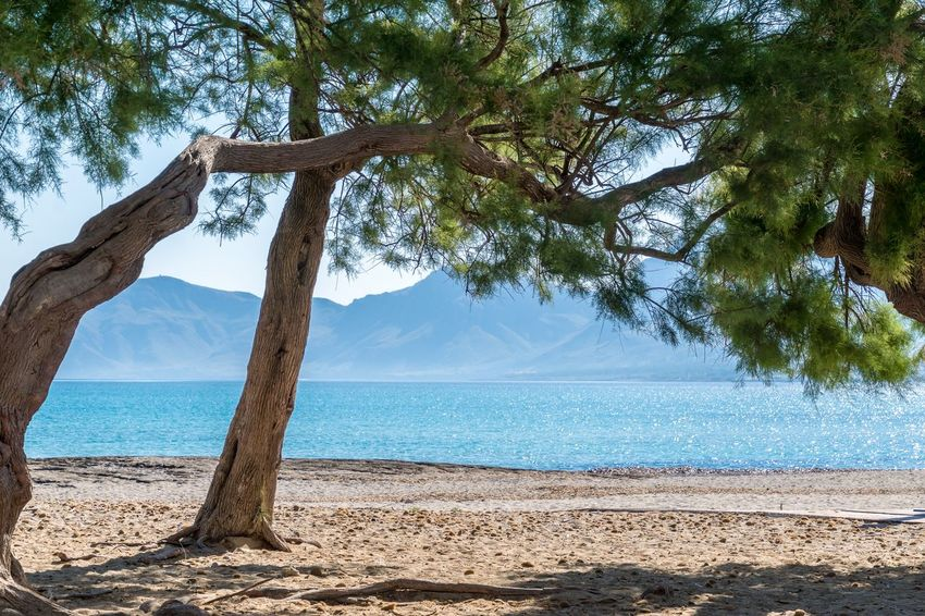 Beach Beauty In Nature Branch Day Growth Horizon Over Water Landscape Mallorca Nature No People Non-urban Scene Outdoors Scenics Sea Sky Son Serra De Marina The Great Outdoors - 2017 EyeEm Awards Tranquil Scene Tranquility Tree Tree Trunk Water