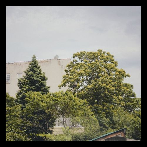 Trees growing by building against sky