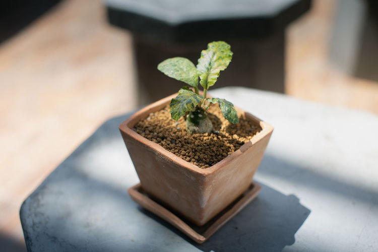 High angle view of small potted plant on table