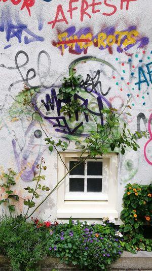 The Street Photographer - 2017 EyeEm Awards Flower Graffiti Graffiti Wall Amsterdam Colors Color Colorful Flowres Blumen Blume Fleurs Sommergefühle