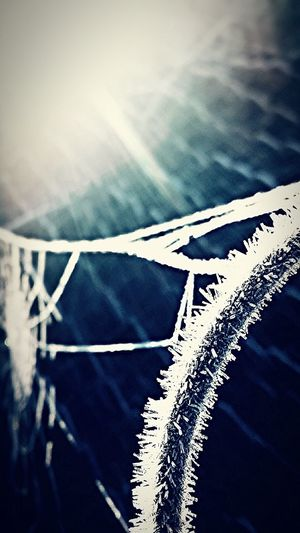 So cold a spider web started to freeze Enjoying Life