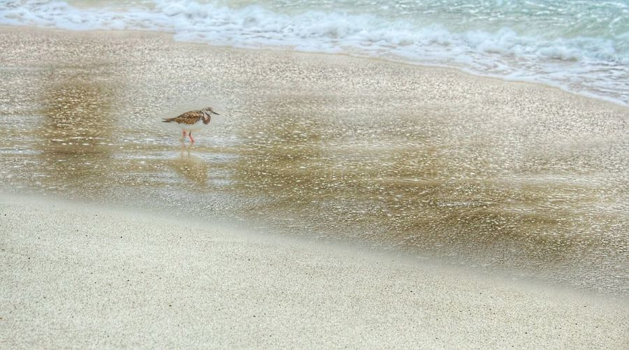 Following wildlife often brings a lesson of simplicity, of a path not followed. Bird Beach Sand Shore Sandy Shore Bird On A Beach Bird In The Sand Bird Walking On The Beach Bird Walking On The Sand Letgodhandleit One Bird Bird Alone On The Beach Singular Walking Alone Lost Bird All Alone On The Beach Walking On The Beach Nature Photography Wildlife From My Point Of View From My Eyes To Yours Ocean Waves Alone Lonely On The Way TCPM Break The Mold