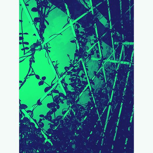 • vines •