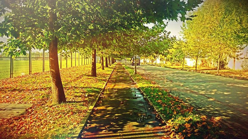 Izmit Fall Colors Falliscoming Kocaeli University Sscwashere EyeEm Best Edits Fall Beauty