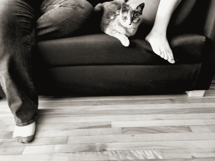 Hardwood Floor Human Body Part Indoors  Adults Only Jeans Sitting Casual Clothing Low Section Only Women High Angle View Human Leg Friendship Pets Living Room Togetherness People Leisure Activity Let's Go. Together. EyeEmNewHere Beauty In Concept Close-up Scenicphotography Black And White Collection  Beauty In Detail