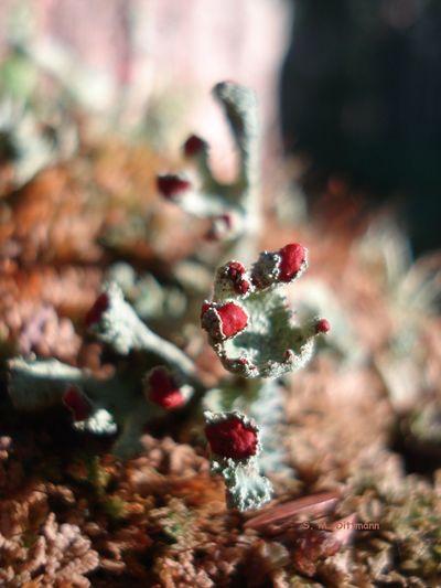 Sporen Waldspaziergang Beauty In Nature Blüte Geweihförmige Holzkeule Nature No People Outdoors Pilze Im Wald Selten