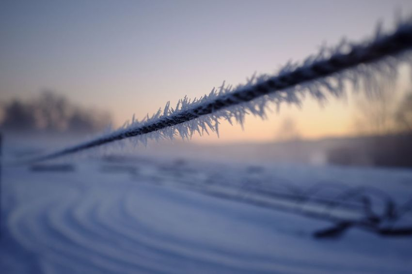 Rim-frost. Omberg, Sweden. Frost Crystals Lines And Patterns Close-up Winter Outdoors No People Cold Temperature Nature Focus On Foreground Close-up Sky Day Snow Beauty In Nature