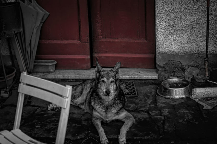 Dogs Outdoor Photography Black & White Nature No People, Red Door Portrait